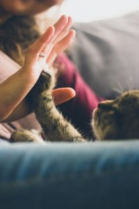 Kitty holding hand of owner